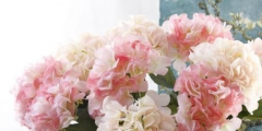 人造花商标注册属于哪一类?
