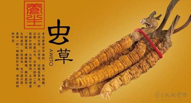 冬虫夏草产品商标属于哪一类